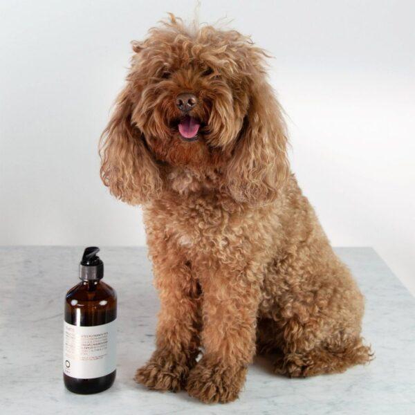 Oway Duetto Dog Shampoo 240ml